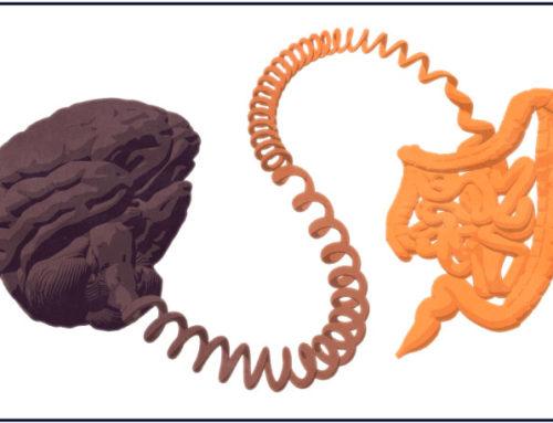Un nouvel acteur de votre santé : l'axe intestin-immunité-cerveau