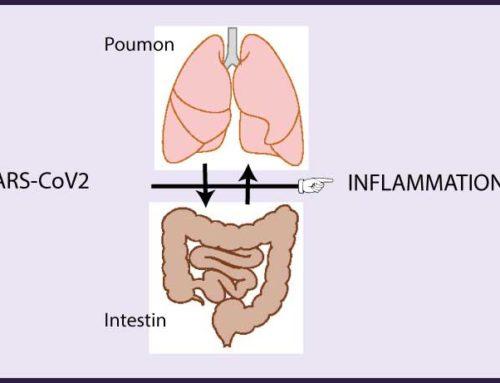 Comment vos intestins vont venir au secours de vos poumons dans la covid-19 ?